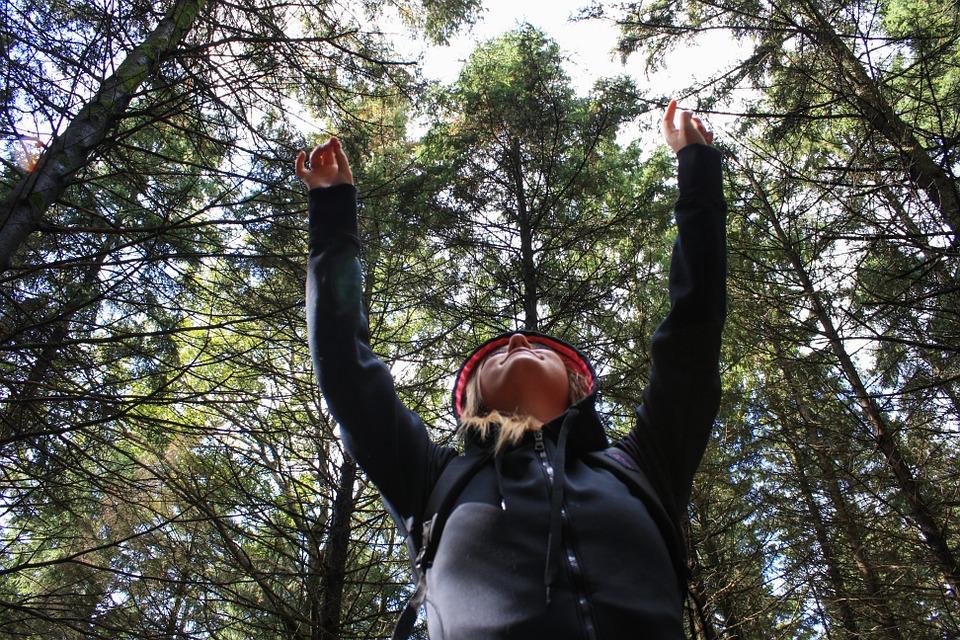 森の案内人