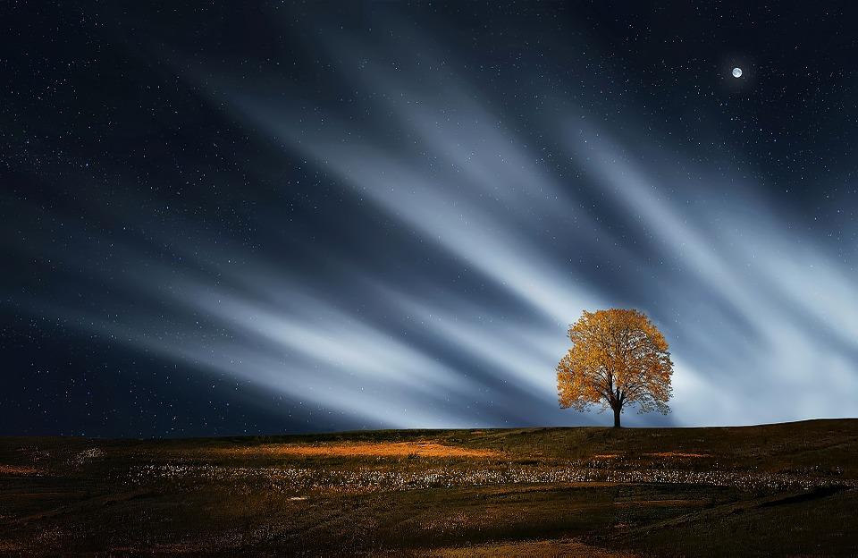 二黒土星tree