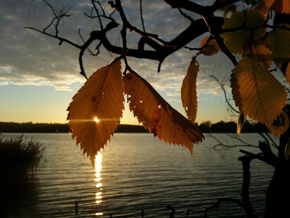 黄金の木の葉と落日