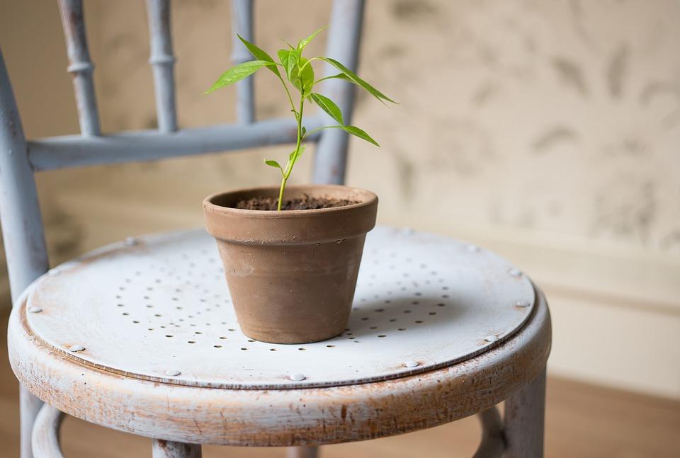 小さな植物2