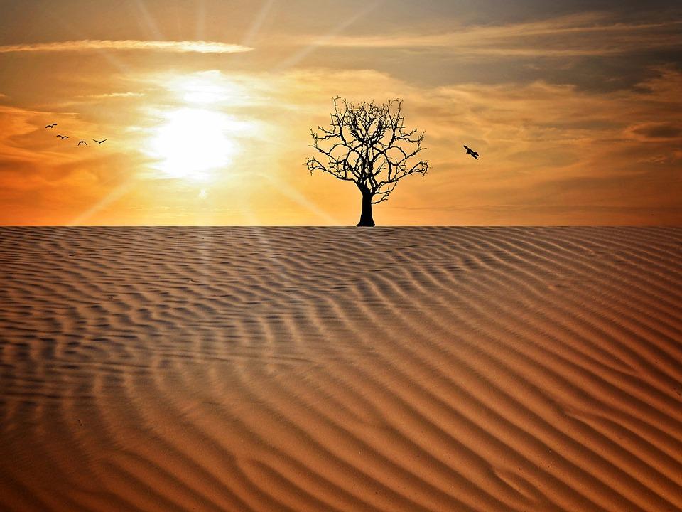 九紫火星tree