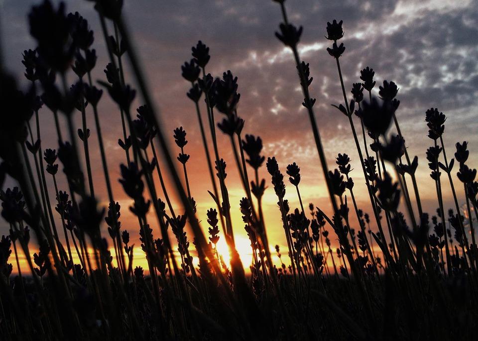 花越しの落日