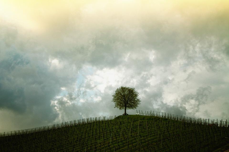 五黄土星tree