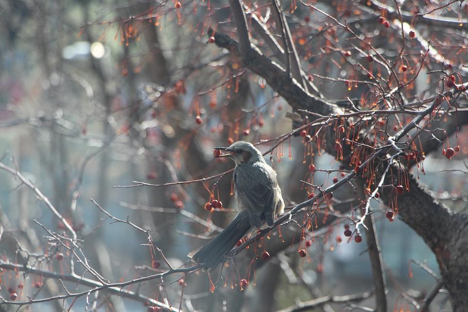 木の実を咥える鳥