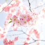 2017年上半期の運勢(おさらいVer.):生まれ月別