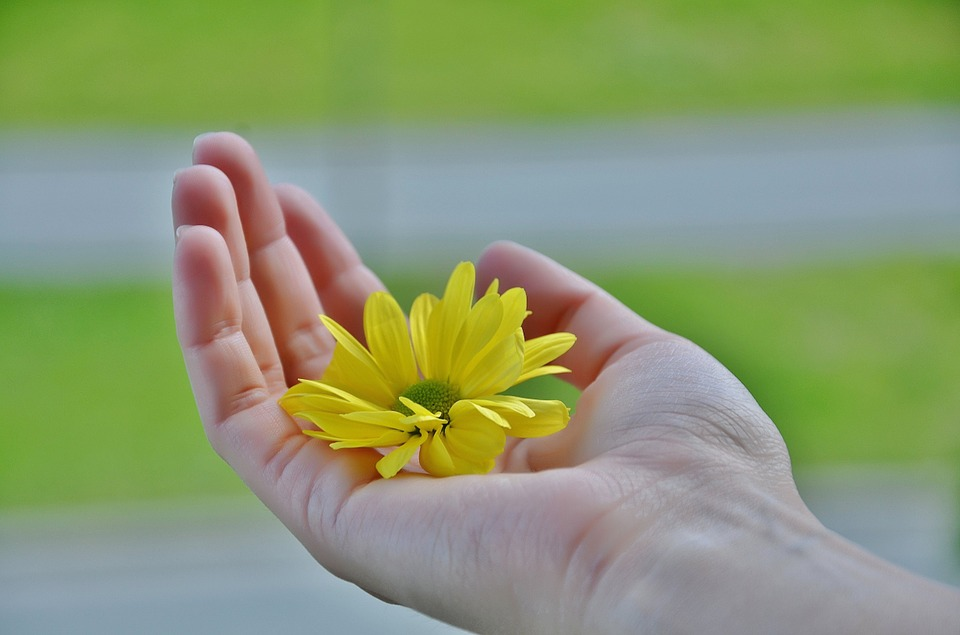 掌の上に黄色い花