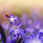 【夢占い】嫌な蚊も実は幸運の予兆?昆虫の夢に関する8選!